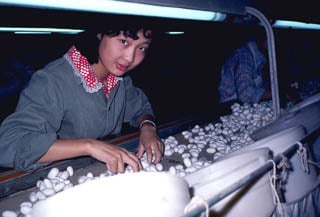 Sildworm factory China