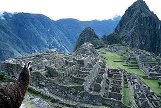 Llama at Machu Pichhu
